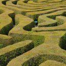 hedge_maze_shutterstock_31519291_medium